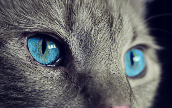 Will your pet be the next psychic superstar?